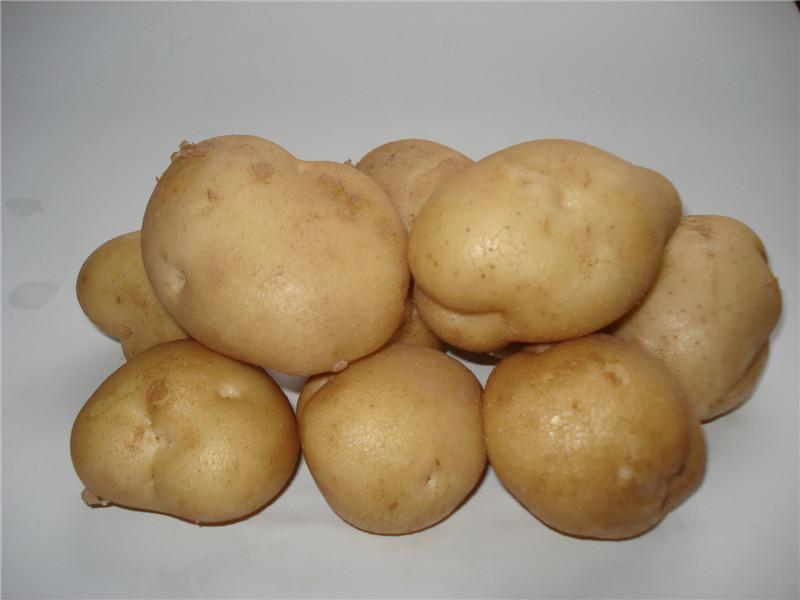 定边马铃薯